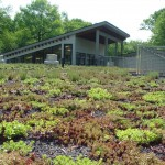 A green, living roof