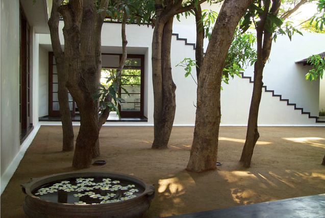 warm tree courtyard