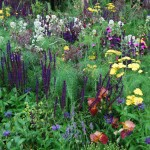Beauty and the beets; make a truly mixed border
