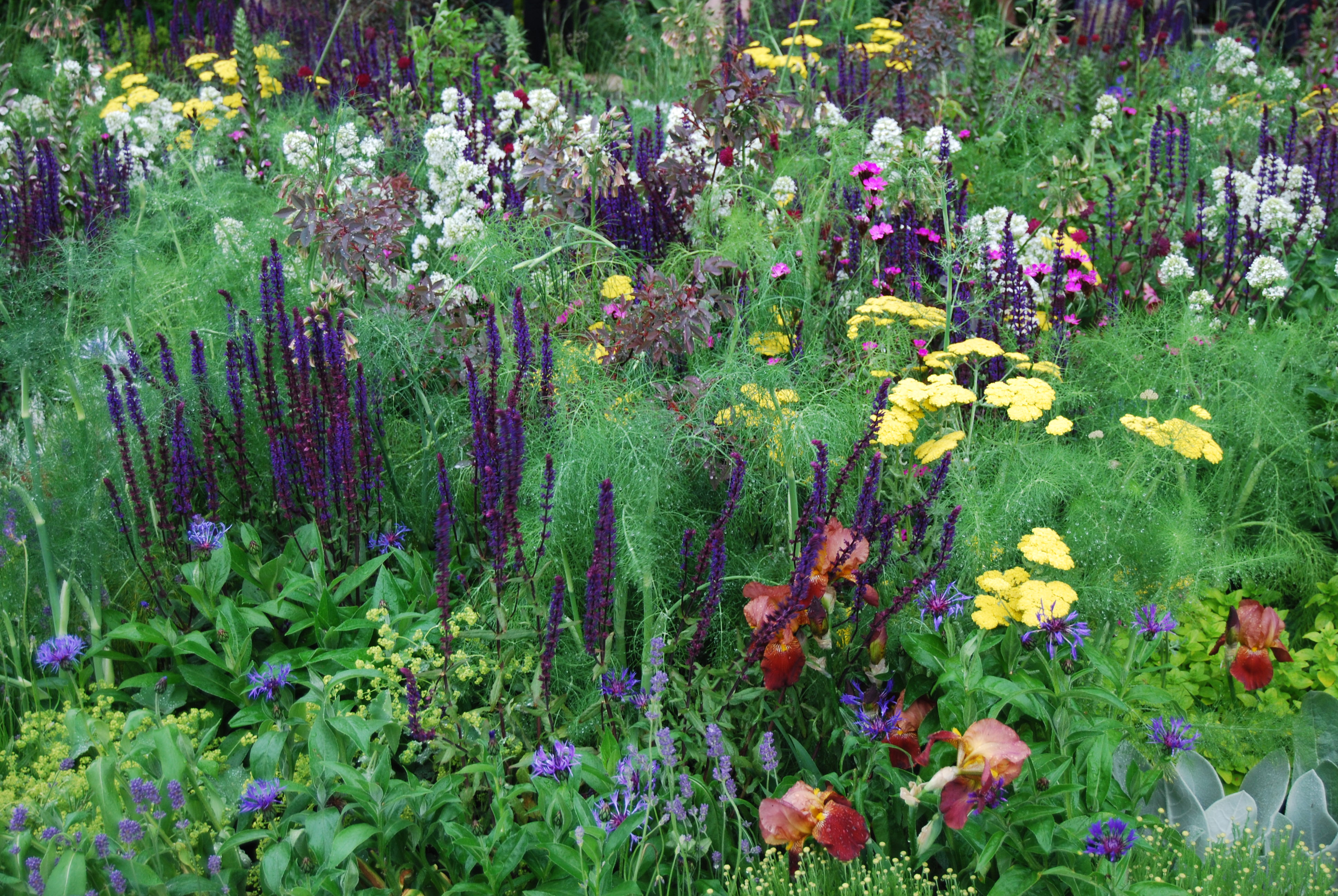 Beauty and the beets make a truly mixed border styleseed for Low maintenance planting schemes