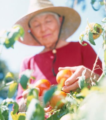 old person picking fruit