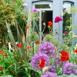 A riot of colour in a narrow family garden