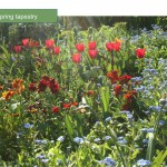 Planting plan service: a tapestry of Spring colour