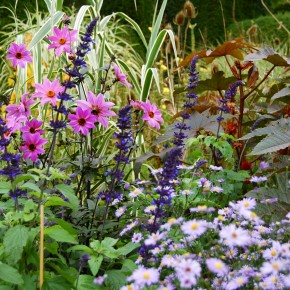 A kaleidoscope of late summer colour
