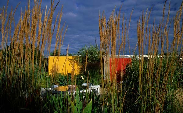 Shots of colour enliven this simply-planted roof terrace