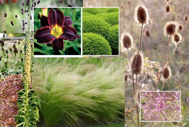 planting design styleseed grasses