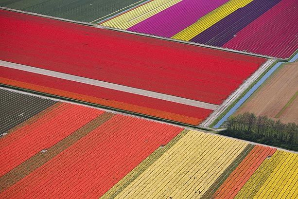 tulips-holland_668243a