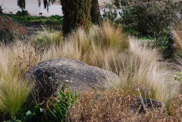 stipa and rock
