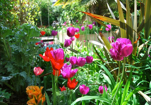 planting design styleseed tulips