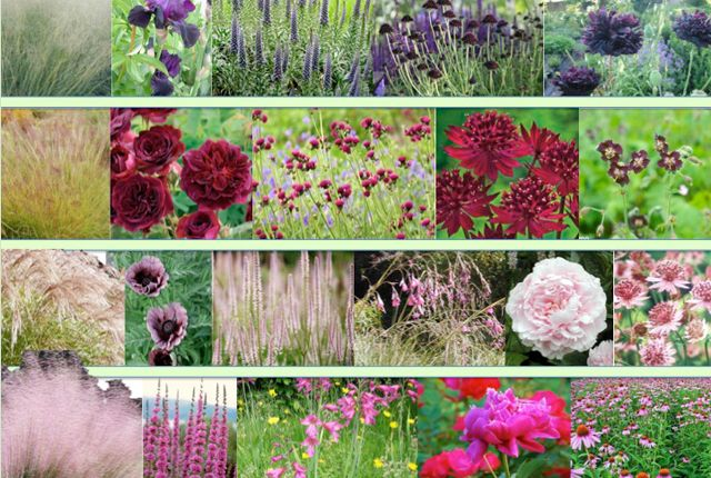 planting design styleseed pinks